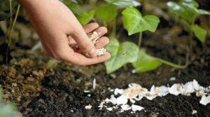 Агротехнические меры