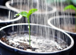 Главные правила полива растений
