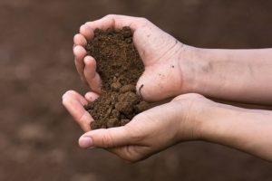 Делаем глинистую почву плодородной