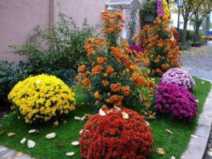 Какие цветы посадить на клумбе чтобы цвели с весны до осени