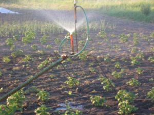 Как сделать полив огорода своими руками