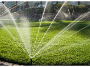 Правильный полив газонной травы