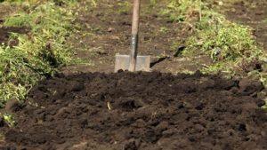 Профилактические методы появления проволочника на картошке и картофельном поле весной и осенью