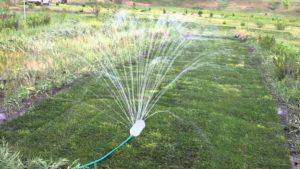 Способы полива огорода