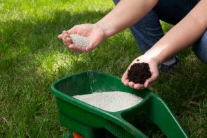 Чем удобрять газонную траву