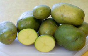 Вред и противопоказания картошки