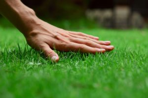 Выбор газонной травы