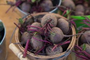 Выращивание свеклы: сбор урожая и его хранение