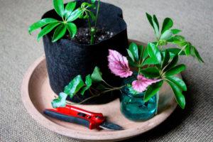 Выращивание цветов в домашних условиях