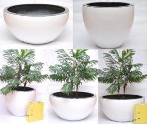 Как выбирать горшок для пальмы