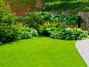 Как посадить газон на дачном участке