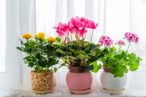 Как посадить цветы дома