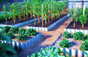 Как правильно посадить огород
