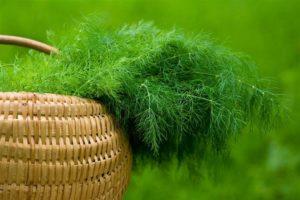 Как правильно собирать урожай