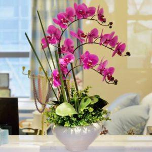Как ухаживать за орхидеей в горшке после покупки