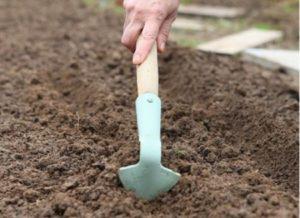 Подготовка грядки перед посадкой моркови