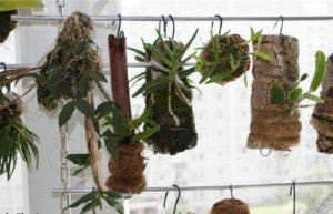 Посадка орхидеи: блоки, горшки, корзины