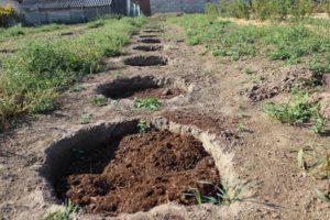 Почва для посадки голубики садовой