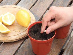 Почва и горшки