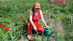 Уход за тюльпанам